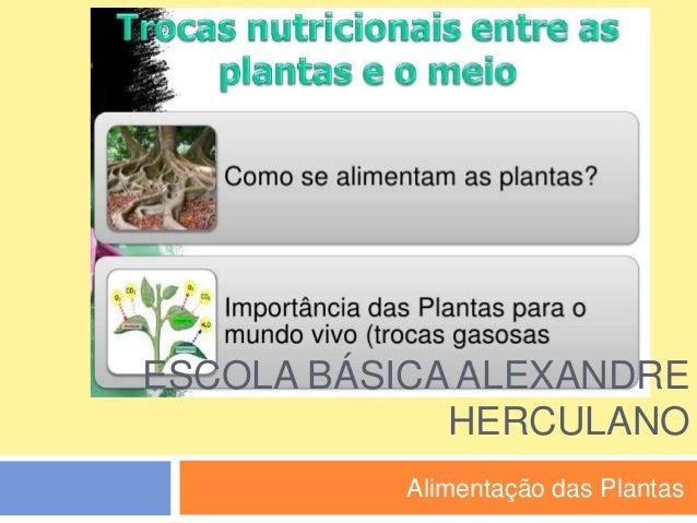 ESCOLA BÁSICA ALEXANDRE HERCULANO Alimentação das Plantas