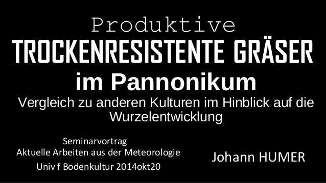 Produktive  TROCKENRESISTENTE GRÄSER  im Pannonikum  Vergleich zu anderen Kulturen im Hinblick auf die  Wurzelentwicklung ...