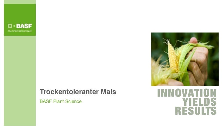Trockentoleranter MaisBASF Plant Science