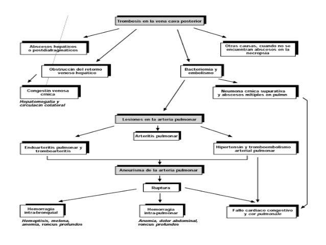 Los síntomas de la enfermedad varikoza