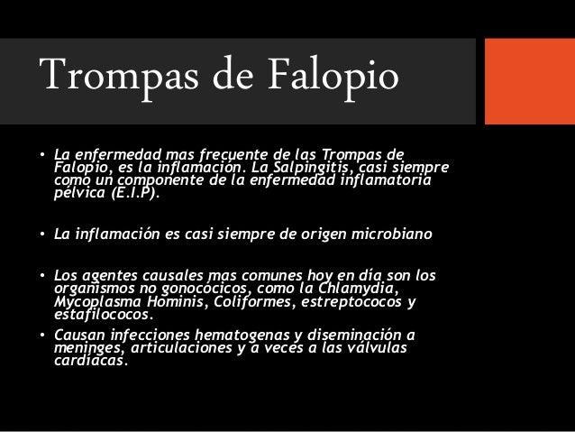 patologias de las trompas de falopio y ovarios