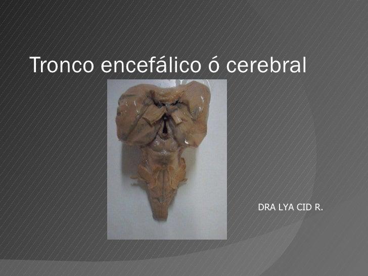 Tronco encefálico ó cerebral DRA LYA CID R.