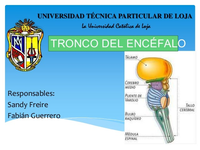 Responsables: Sandy Freire Fabián Guerrero UNIVERSIDAD TÉCNICA PARTICULAR DE LOJA La Universidad Católica de Loja TRONCO D...