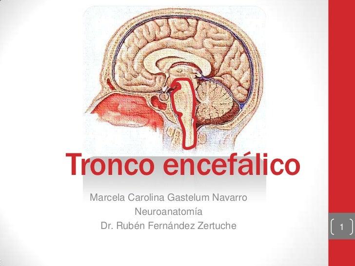 Tronco encefálico Marcela Carolina Gastelum Navarro          Neuroanatomía  Dr. Rubén Fernández Zertuche       1