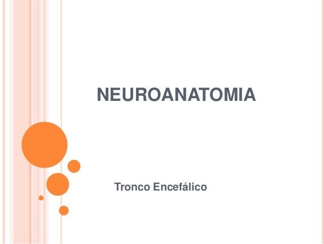 NEUROANATOMIA Tronco Encefálico
