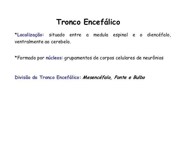 Tronco Encefálico *Localização: situado entre a medula espinal e o diencéfalo, ventralmente ao cerebelo. *Formado por núcl...