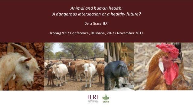 Animal and human health: A dangerous intersection or a healthy future? Delia Grace, ILRI TropAg2017 Conference, Brisbane, ...