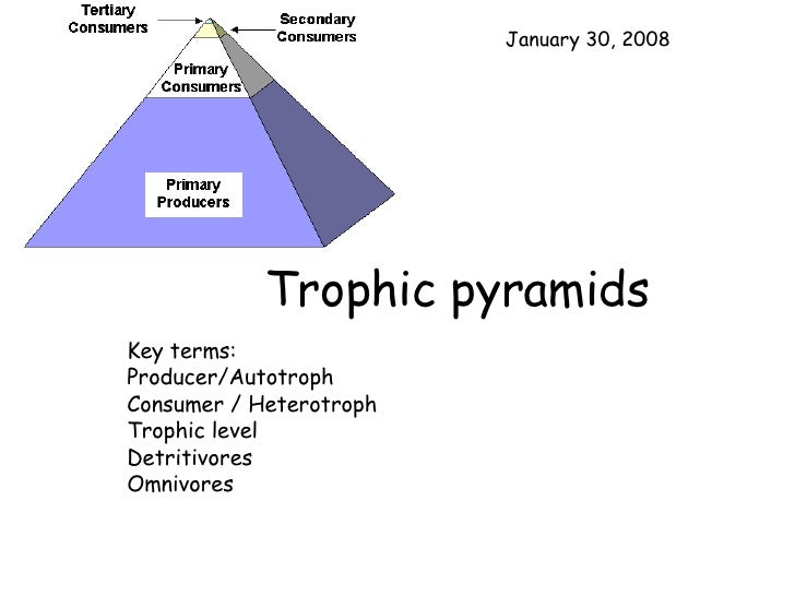 Trophic pyramids Key terms: Producer/Autotroph Consumer / Heterotroph Trophic level Detritivores Omnivores May 29, 2009