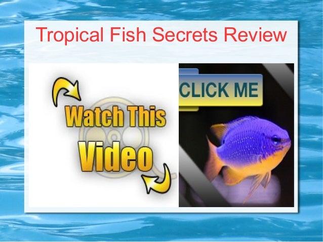 Tropical Fish Secrets Review