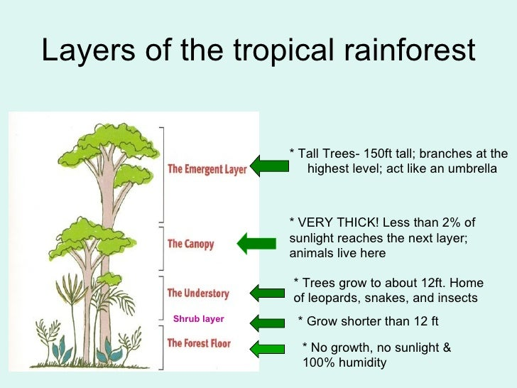 What are Rainforests?