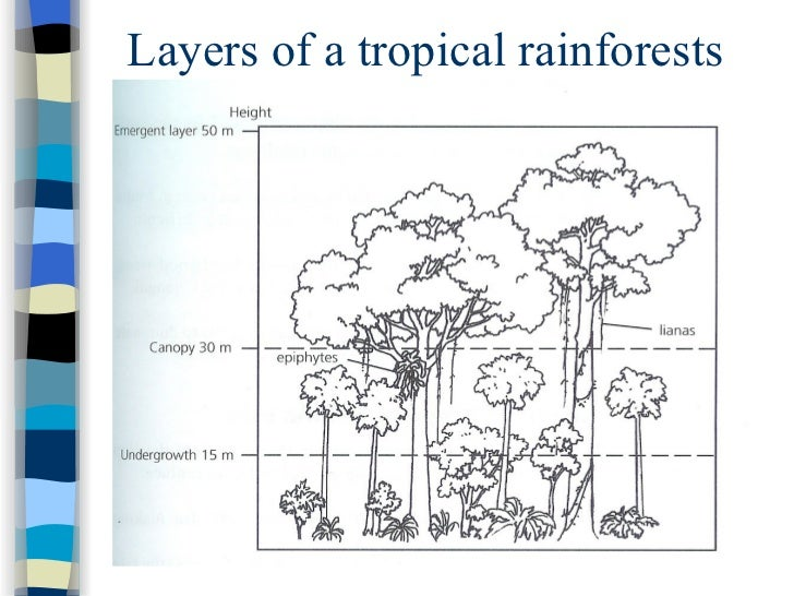 Sec 1 Exp Tropical Rainforests – Layers of the Rainforest Worksheet