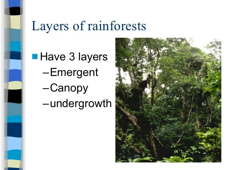 diagram of a rainforest in the undergrowth wiring diagram Strawberry Diagram sec 1 exp tropical rainforests strawberry diagram diagram of a rainforest in the undergrowth
