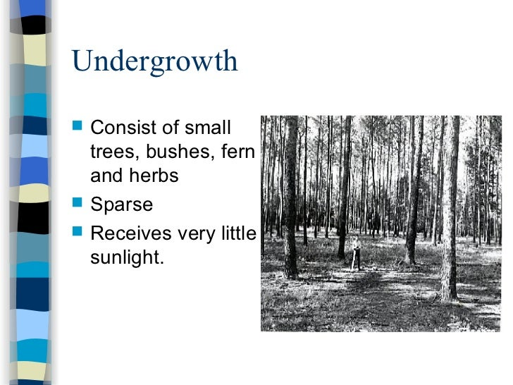sec 1 na tropical rainforestsDiagram Of A Rainforest In The Undergrowth #7