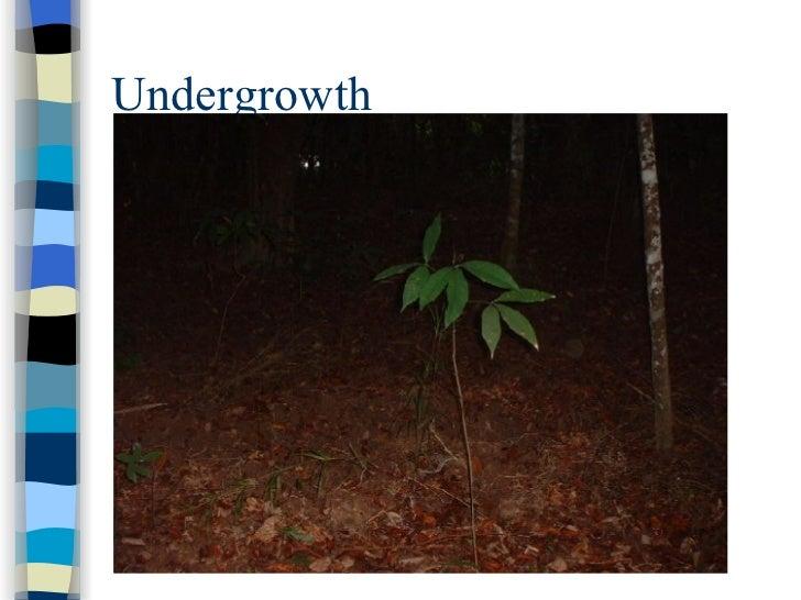 sec 1 na tropical rainforests Strawberry Diagram undergrowth; 20