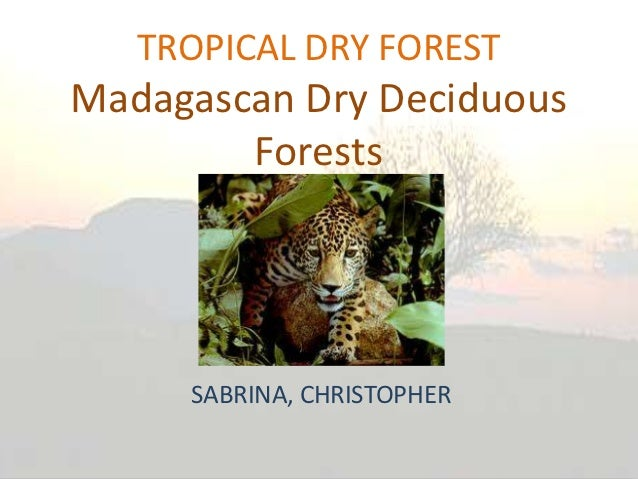 TROPICAL DRY FORESTMadagascan Dry Deciduous        Forests     SABRINA, CHRISTOPHER