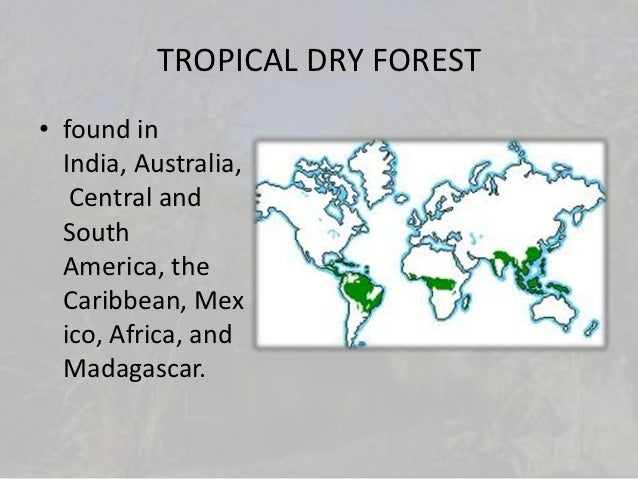 tropical dry forest interesting facts