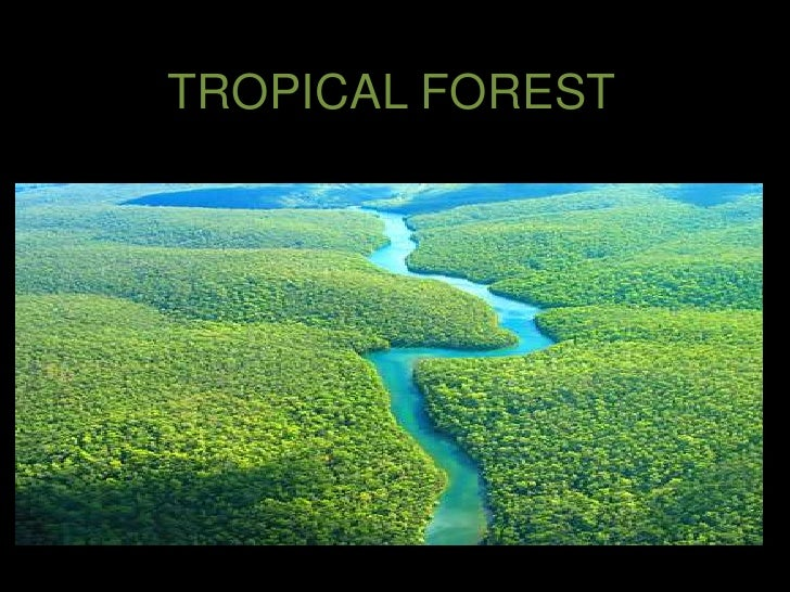 TROPICAL FOREST <br />