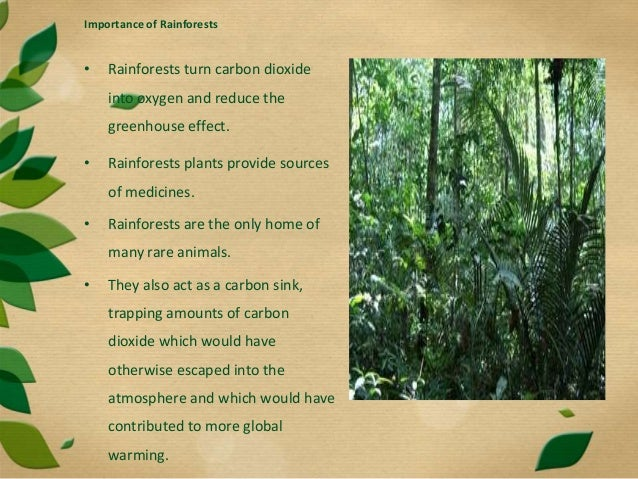 te importance of rainforests The rainforest is an immensely diverse environment scientists estimate that one- third of the earth's plant and animal species live in tropical rainforests.