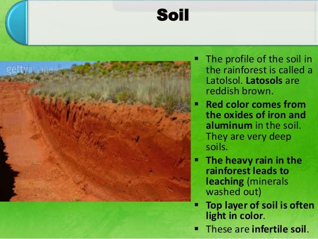Tropical forest ecosystem for What does soil come from