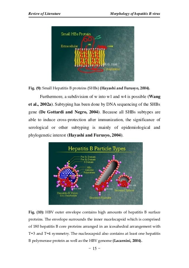 thesis on hepatitis b virus Hepatitis b is the known as the most serious of the common liver infections in the world it is estimated that approximately 350 million people are chronic carriers of hbv or the hepatitis b.