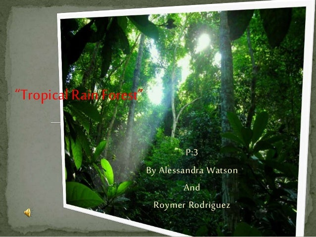 """""""TropicalRain Forest"""" P:3 By Alessandra Watson And Roymer Rodriguez"""