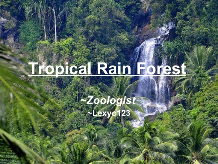 Tropical Rain Forest   ~Zoologist   ~Lexyc123