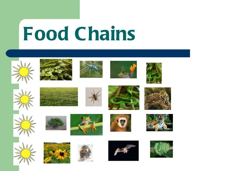 food chains 9 food web plants amphibians insects mammals reptiles