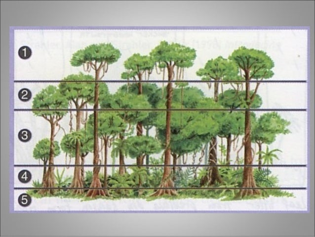 tropical rainforest rh slideshare net