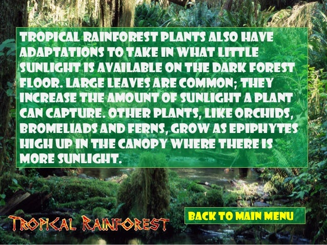 adaptive features of animals in tropical rainforest Many animals have adapted to the rainforest by adopting arboreal how do animals adapt to the rainforest a: animal adaptations in the tropical rainforest.