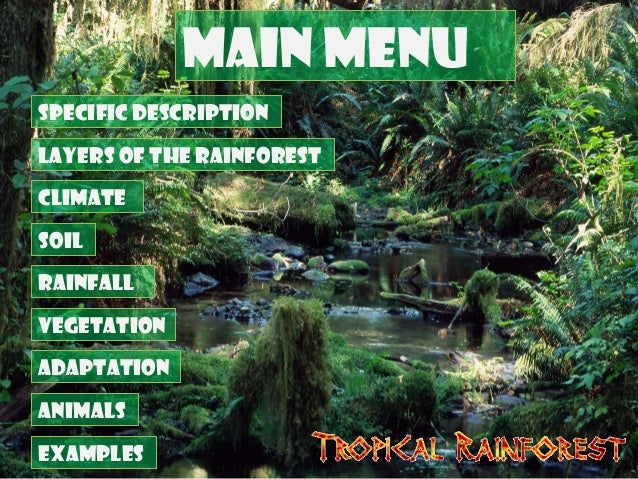 Tropical Rainforest Biome