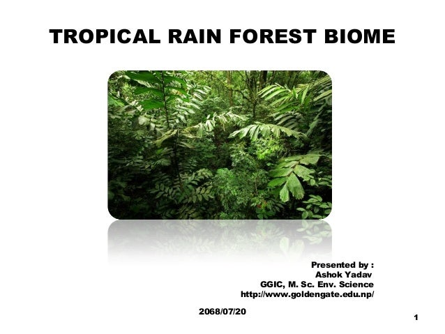 TROPICAL RAIN FOREST BIOME Presented by : Ashok Yadav GGIC, M. Sc. Env. Science http://www.goldengate.edu.np/ 2068/07/20 1