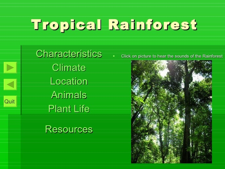 Tropical Rainforest Interactive Pp