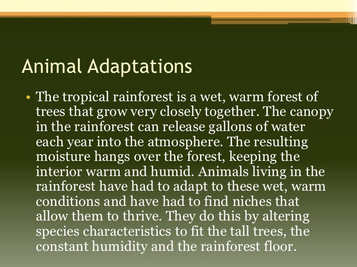 essays about tropical rainforest Short paragraph on tropical rainforest panama is a popular latin american tourist destination.