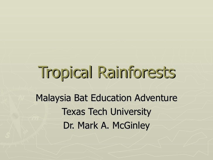 Tropical RainforestsMalaysia Bat Education Adventure     Texas Tech University      Dr. Mark A. McGinley