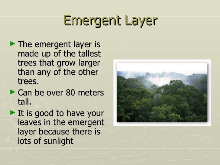 10 Emergent Layer The