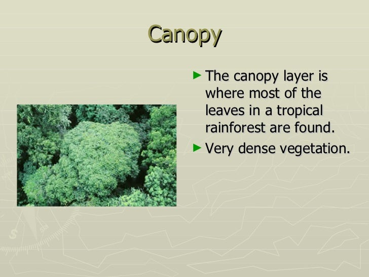 Canopy . & Rainforest Floor Layer Facts - The Ground Beneath Her Feet