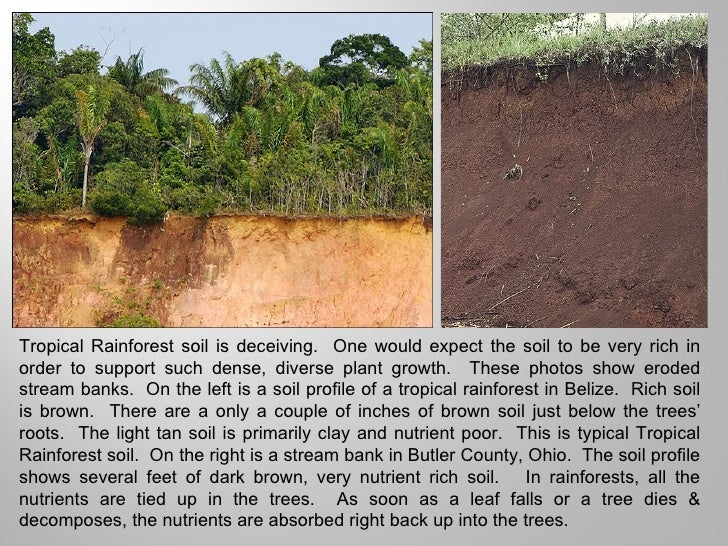 Tropical rainforests power pt