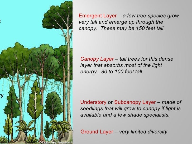 Emergent Layer Canopy Layer Understory or Subcanopy Layer Ground Layer; 9. & Tropical rainforests power pt