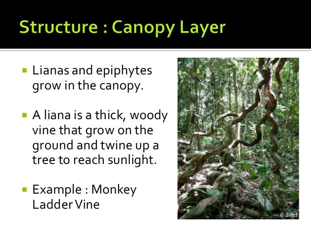 Tropical rainforests structure and adaptation