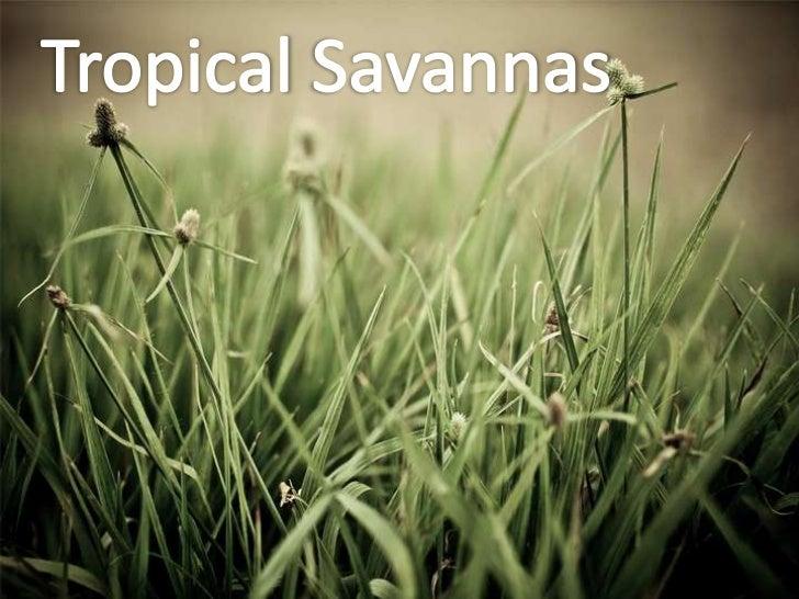 Tropical savannas