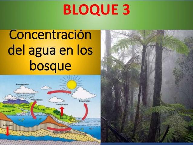 Concentración del agua en los bosque BLOQUE 3