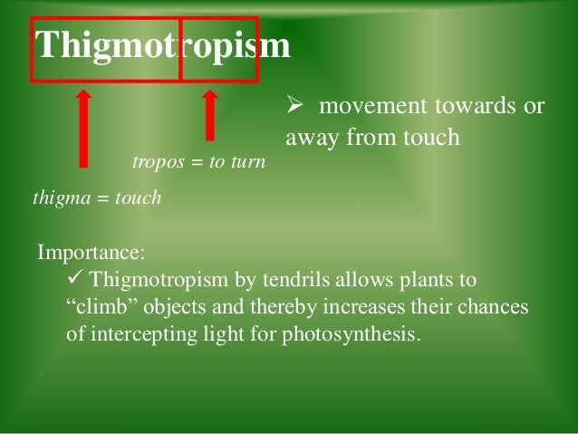 Tropism Slide Share
