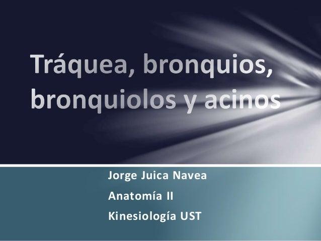 Jorge Juica Navea Anatomía II Kinesiología UST