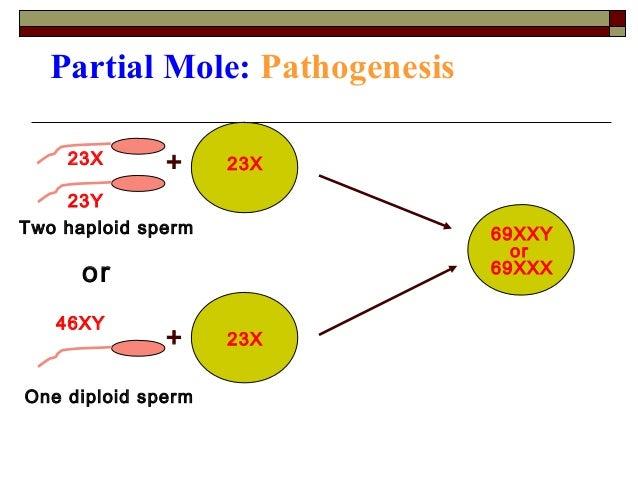 swallow sperm Pku