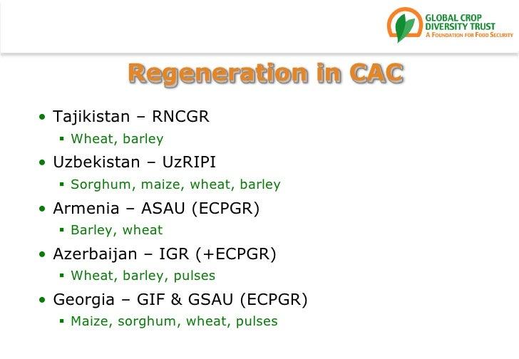 Regeneration in CAC<br />Tajikistan – RNCGR<br />Wheat, barley<br />Uzbekistan – UzRIPI<br />Sorghum, maize, wheat, barley...