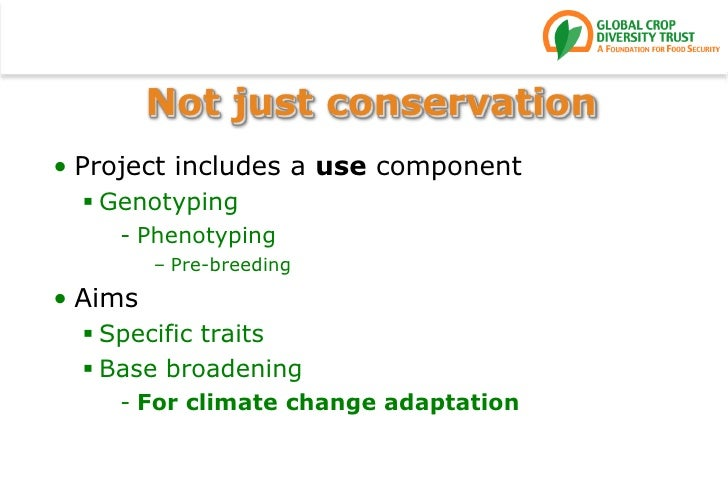 Not just conservation<br />Project includes a use component<br />Genotyping<br />Phenotyping<br />Pre-breeding<br />Aims<b...