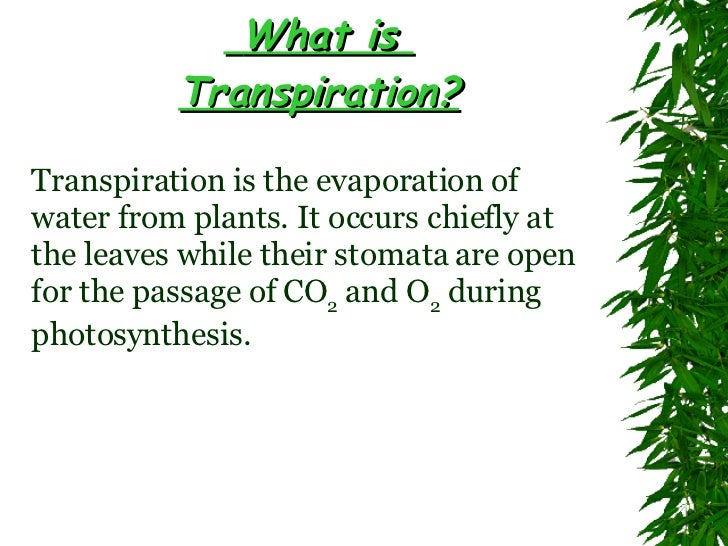 transpiration in plants Additional information plants use sunlight and carbon dioxide present in air to produce food for itself one of the by-products of this chemical reaction is water vapor.