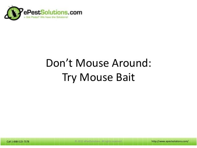 Call 1-888-523-7378Call 1-888-523-7378 Don't Mouse Around: Try Mouse Bait http://www.epestsolutions.com/© 2012 ePestSoluti...