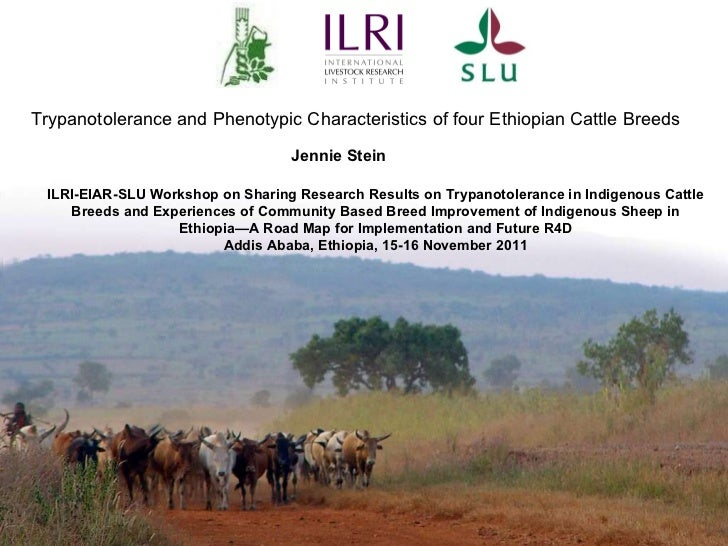 Trypanotolerance and Phenotypic Characteristics of four Ethiopian Cattle Breeds Jennie Stein ILRI-EIAR-SLU Workshop on Sha...