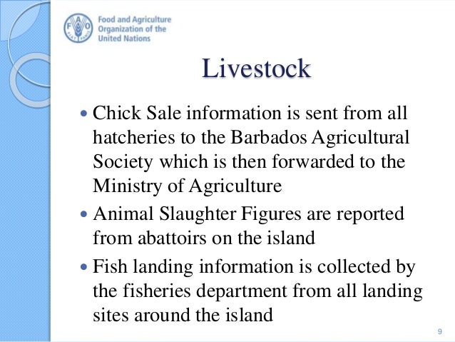 Livestock  Chick Sale information is sent from all hatcheries to the Barbados Agricultural Society which is then forwarde...